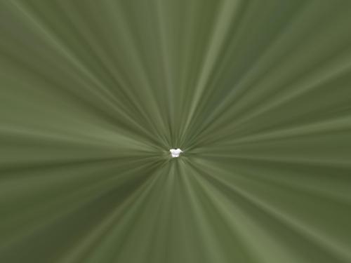 Snapshot5000_015